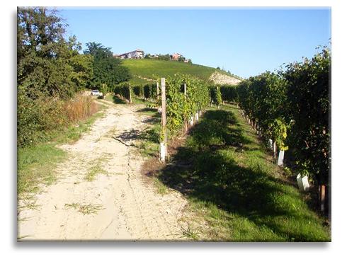 Die Weinberge im malerischen Govone