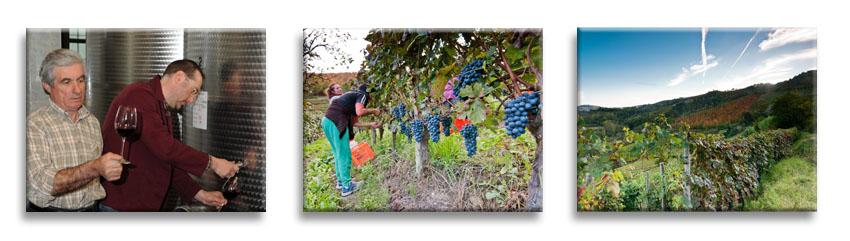 Weinanbau im Familienbetrieb